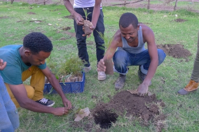 The tree planting organizer