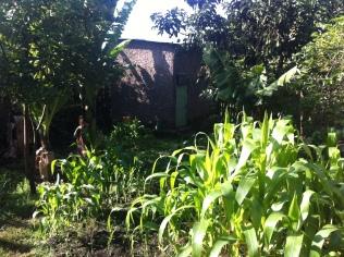 My backyard here in Butajira