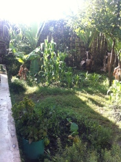 My backyard here in Butajira