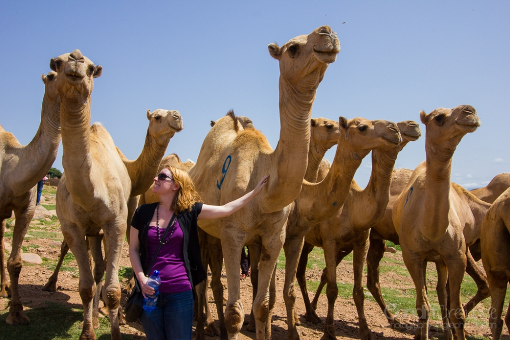 Camels, Hyenas, and Goats Oh My! (6/6)