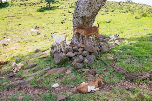 Gondar-Bahirdar-Butajira-112