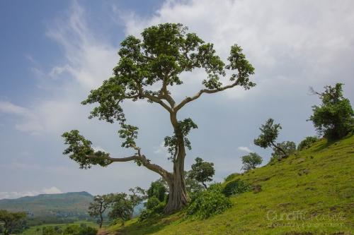 Gondar-Bahirdar-Butajira-113
