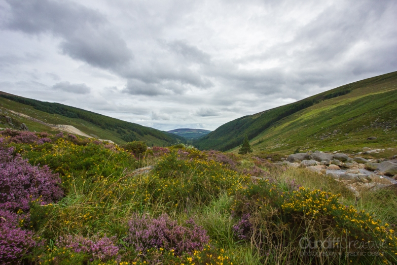 Fields of Heather, Wicklow Mountains