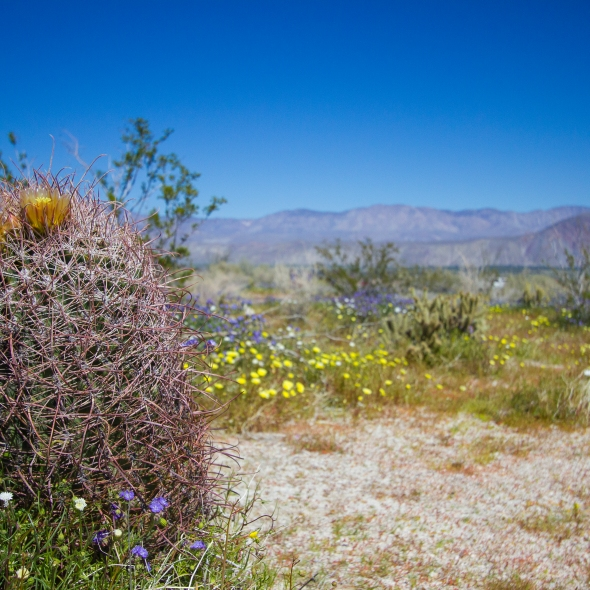 Heather Cundiff, Cundiff Creative, Anza-Borrego