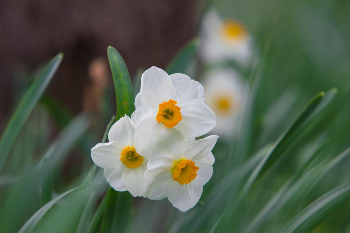 Flowers2020-6856