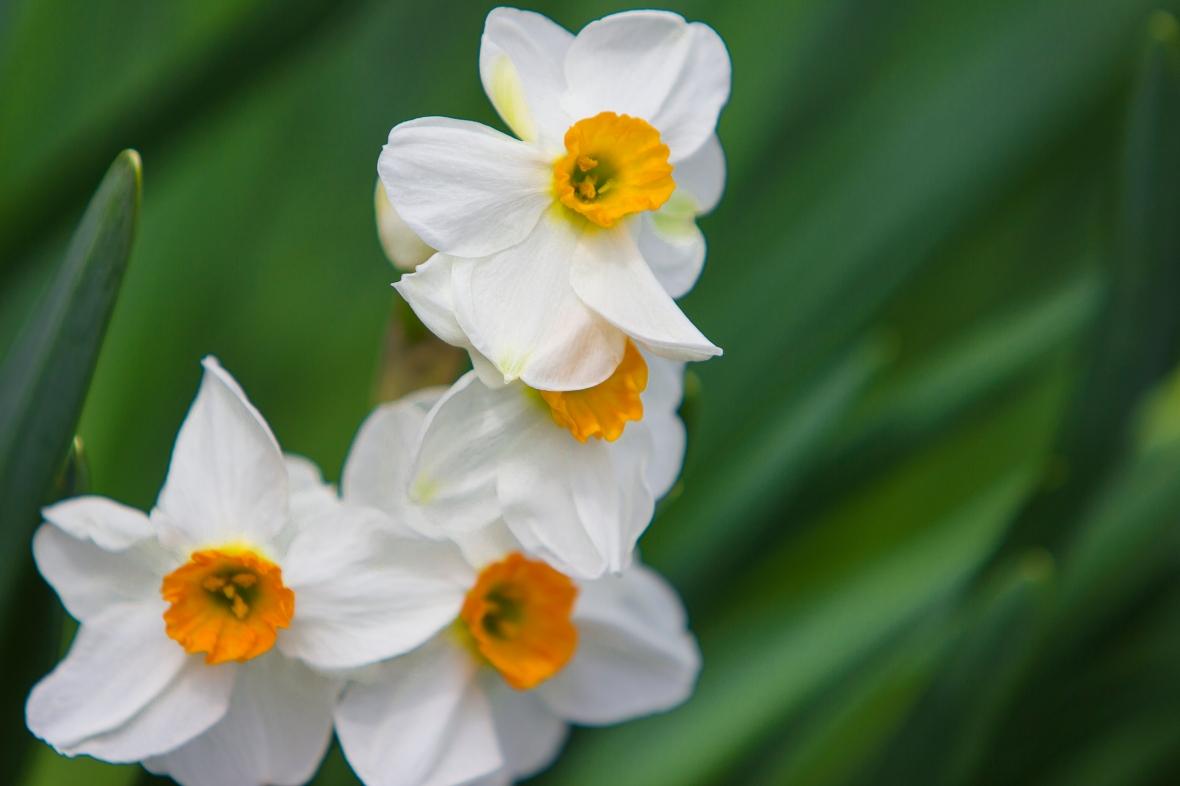 Flowers2020-6866