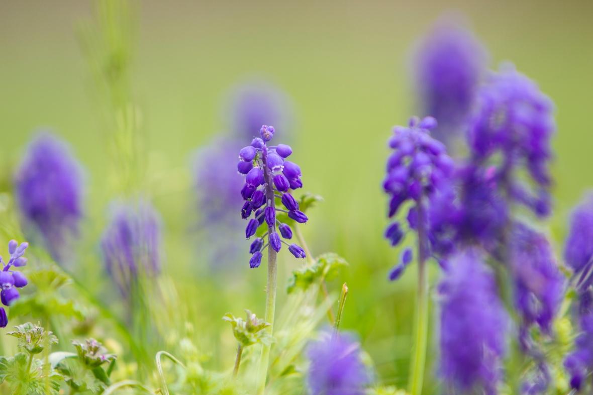 Flowers2020-6886