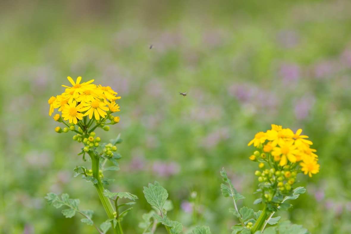 Flowers2020-6891