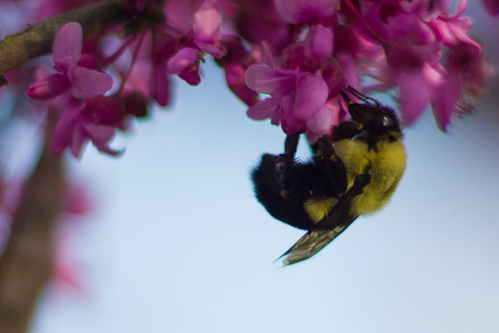 Pollinations-7122