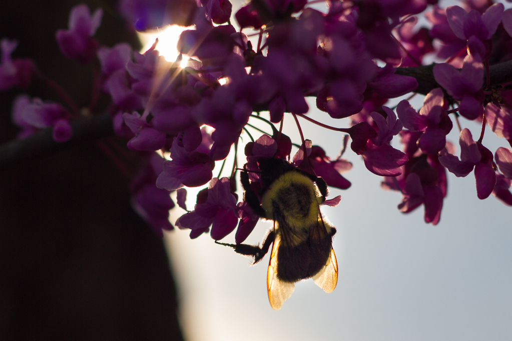 Pollinations-7128
