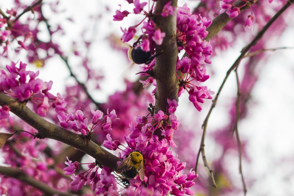 Pollinations-7135