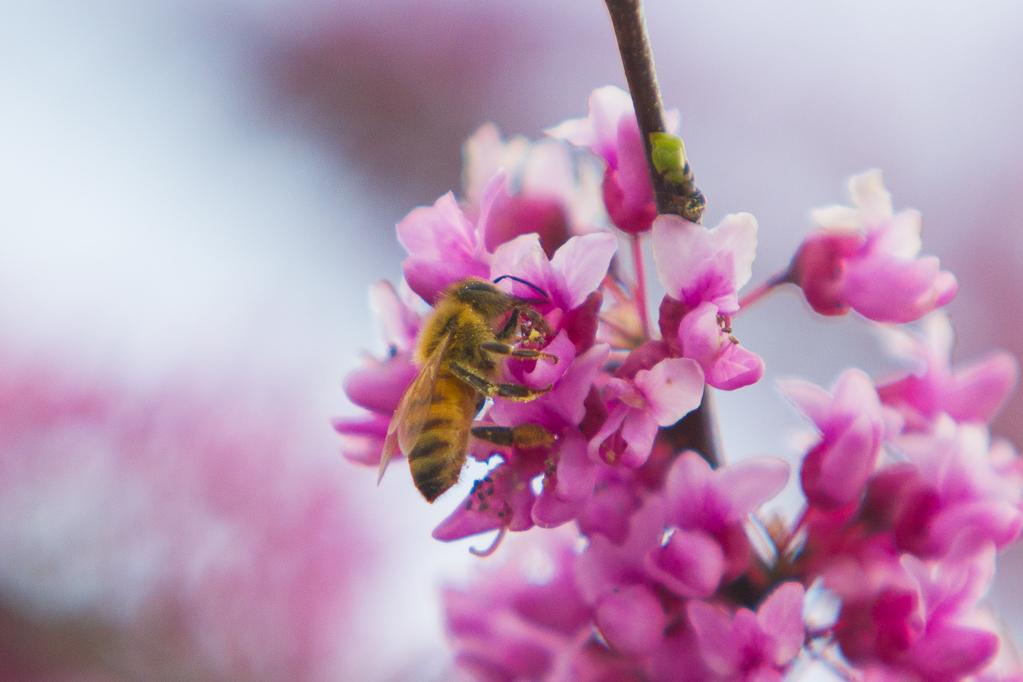 Pollinations-7139