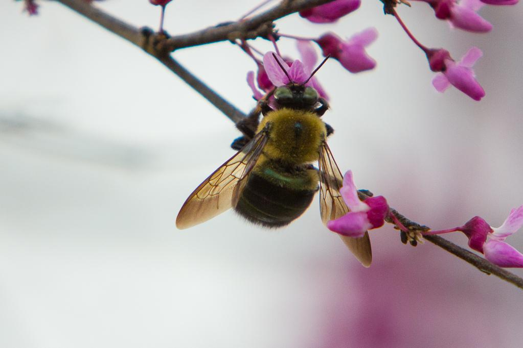 Pollinations-7146