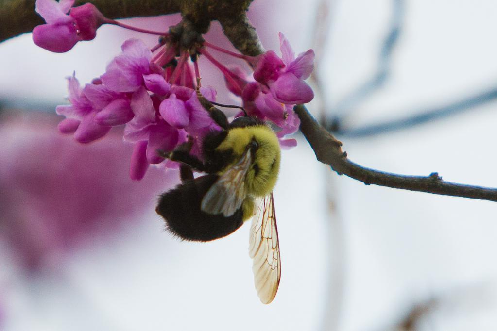 Pollinations-7153