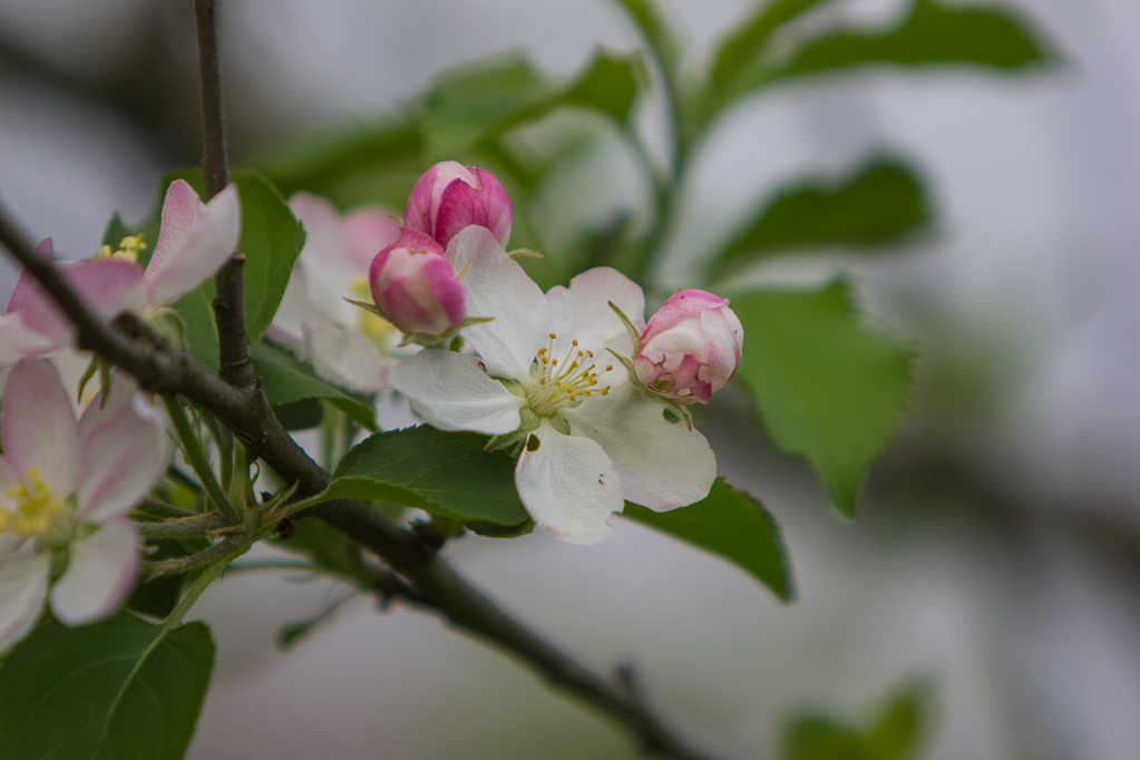 Pollinations-7197