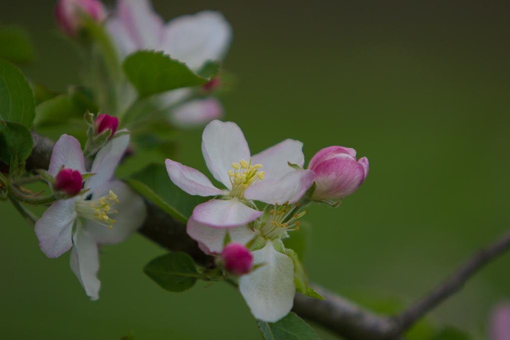 Pollinations-7198